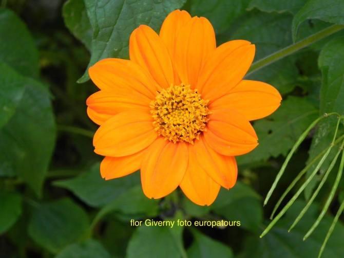 flor amarela 2