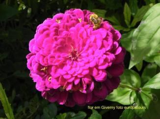 flor com abelha 2